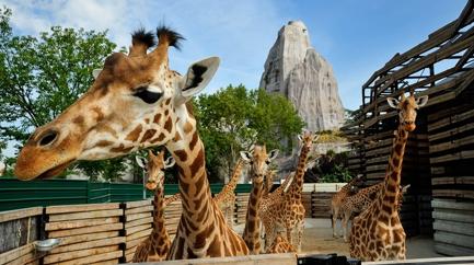 Zoological parc (Vincennes zoo)