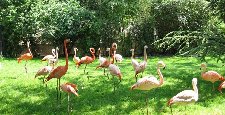 Hobbizer billet coupe file zoo du jardin des plantes - Zoo du jardin des plantes tarifs ...